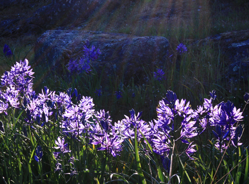 landscape photography flowers. backlighting landscape photography flowers